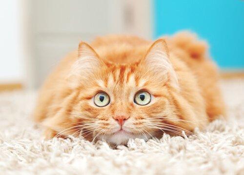 un gattino sdraiato con gli occhi sgranati