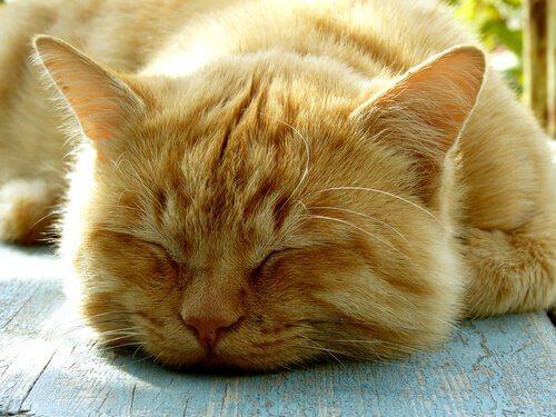 Gatto dorme all'aperto