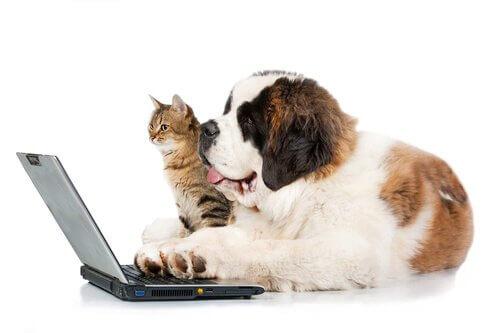 Animali domestici e reti sociali: come evitare i pericoli