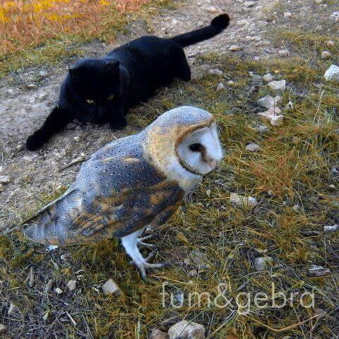 Gatto nero accanto a un barbagianni
