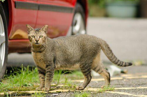 Un gatto randagio accanto a un'auto