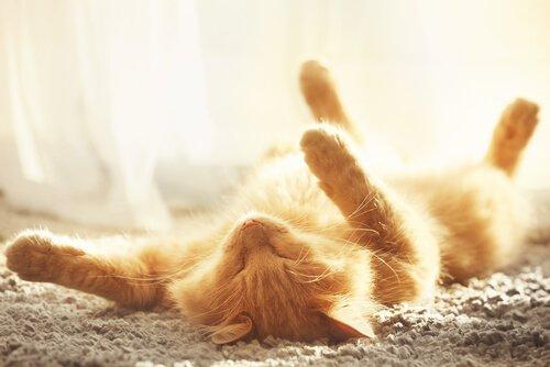 Consigli per evitare il colpo di calore nei gatti