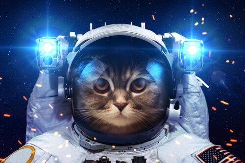 Gatto vestito con la muta spaziale