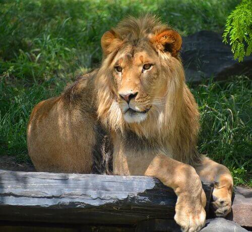 Quali sono le specie proibite come animali domestici?