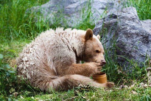 5 animali che mangiano il miele