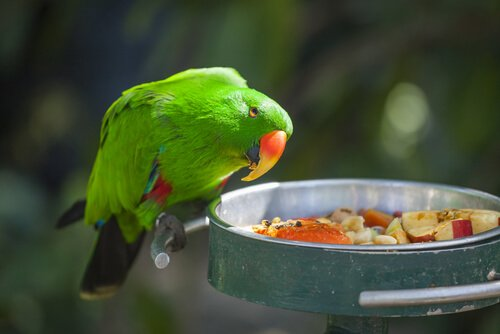 Alimenti pericolosi per i pappagalli