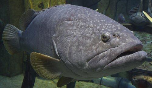 Tutto sulla fauna dell'isola di Madera