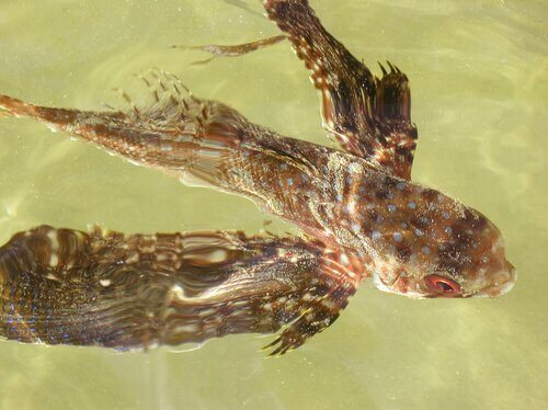 Esempio di pesci volanti