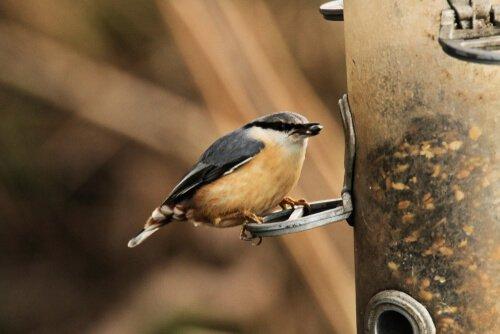 Uccello appoggiato su un nido artificiale