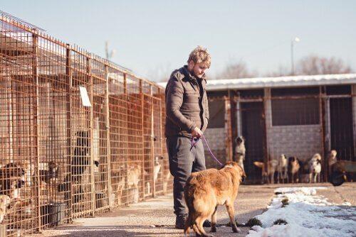 un ragazzo adotta un cane in un rifugio