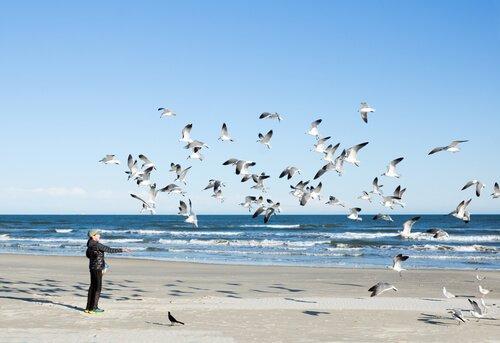 Canzoni dedicate agli uccelli