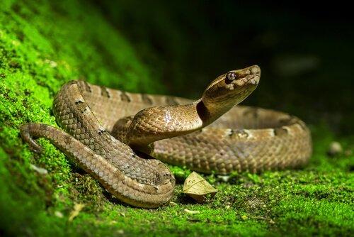 Cosa fare se trovate un serpente in giardino
