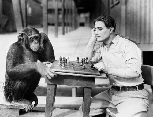 Uomo gioca a scacchi con una scimmia