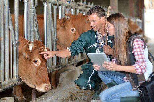 Che cosa fanno i veterinari?
