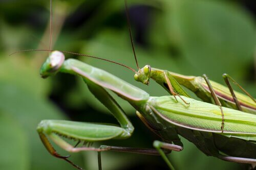 5 curiosità sessuali sugli animali che non potete perdervi