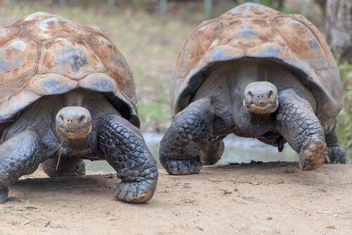 Conoscete la fauna delle isole Galapagos?
