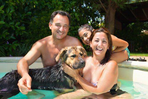 Consigli per comprare una piscina per cani