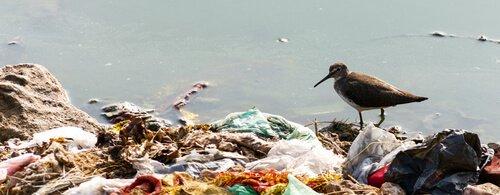 Gabbianella cammina su un cumulo di immondizia
