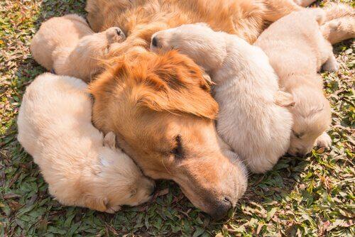 una madre con i suoi cuccioli sdraiati sul prato