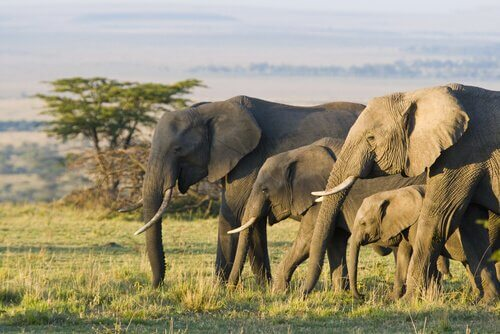 5 animali che vivono nella savana africana