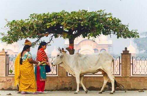 Mucca sacra passeggia per una strada dell'India