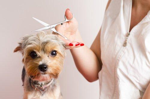 Che fare se il cane ha paura del parrucchiere?
