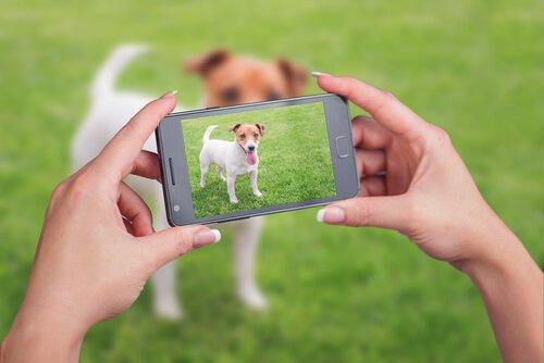 Consigli per fare video a cani e gatti
