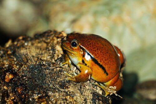 Le 5 rane più piccole del mondo