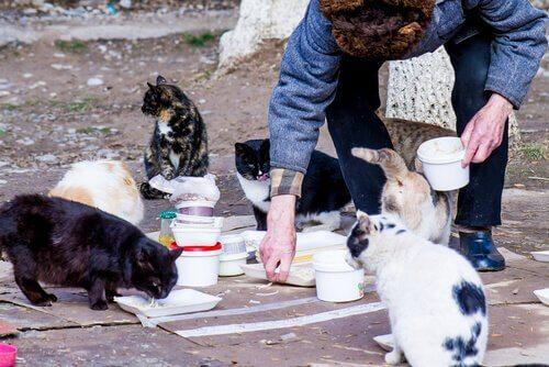 Una signora nutre una colonia di gatti