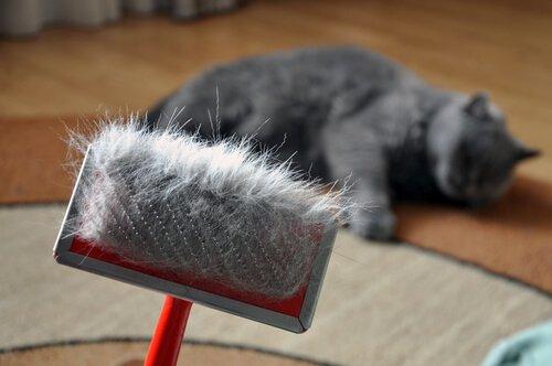 una spazzola con i peli di un gatto sdraiato sul fondo