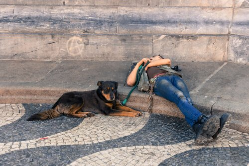 5 bellissimi itinerari per viaggiare in Europa con il cane
