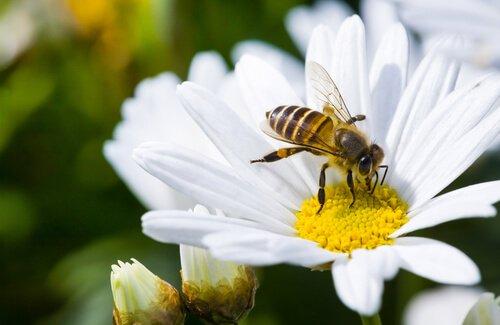 Senza api non c'è vita: la delicata situazione dell'ecosistema