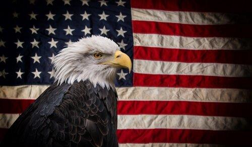 un'aquila calva davanti alla bandiera USA