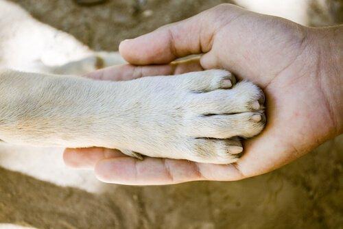 Qual è il cane con le zampe più forti?