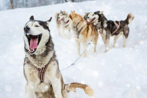 Ecco 4 categorie di nomi per un cane maschio