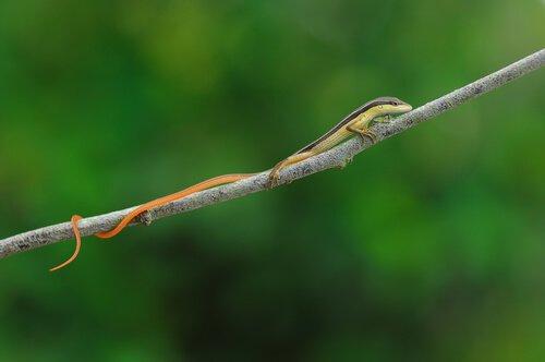 Scopriamo i 5 animali con la coda più lunga