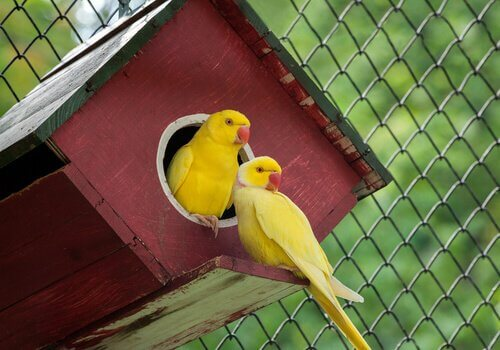 Scopriamo insieme 5 animali di colore giallo