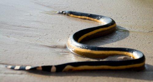 5 serpenti di mare che dovete conoscere