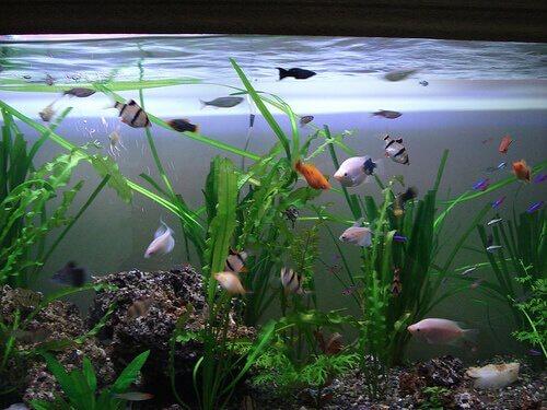 Pesci di vario tipo in un acquario