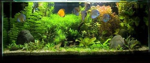 Come scegliere i pesci più adatti per un acquario