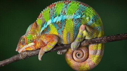 Conosciamo gli animali che possono cambiare colore
