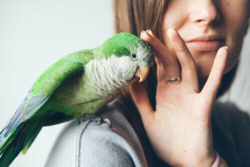 Consigli su come usare gli antiparassitari per gli uccelli