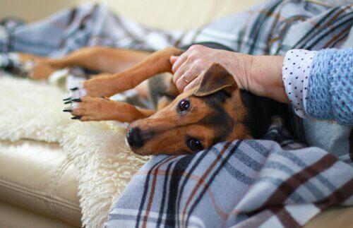 Anziana con cane in grembo