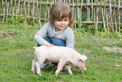 Bambina con maiale sul prato