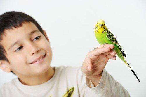 bambino con uccello sulla mano