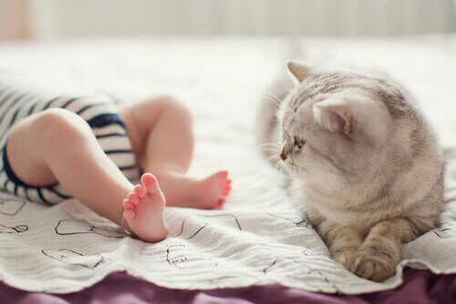 bebè dorme accanto a un micio