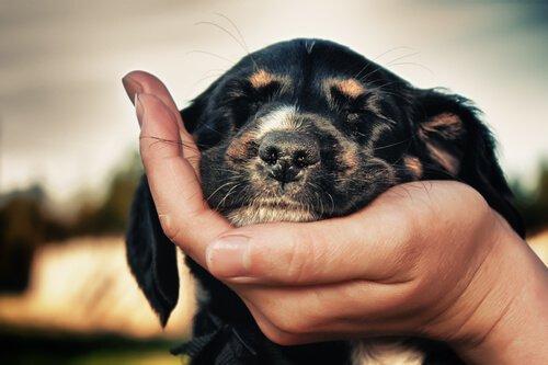 cagnolino appoggia testa su mano padrona