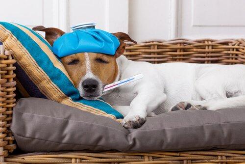 Cagnolino con febbre sdraiato