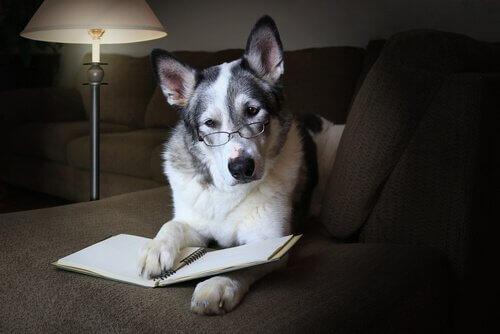 Come migliorare le abilità sociali del cane