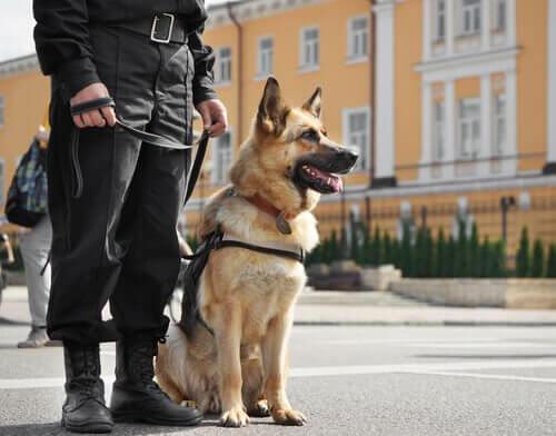 Cane poliziotto con padrone